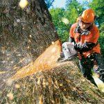 na-valschika-lesa