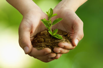 kvalifikatsii-po-kursu-ekologiya-i-prirodopolzovanie