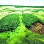Профессиональная переподготовка по курсу Экология, охрана окружающей среды и экологическая безопасность