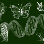 Профессиональная переподготовка по курсу Учитель биологии